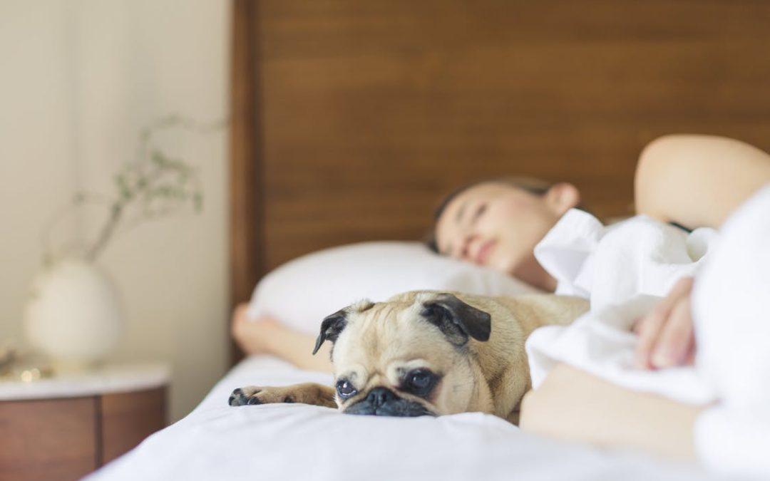 Qu'est-ce qui vous empêche de dormir?